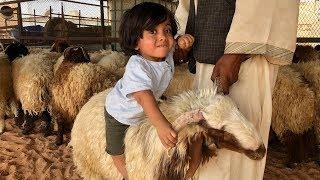 حمودي يلعب مع خروف العيد شوفو وش سوا 😂😂