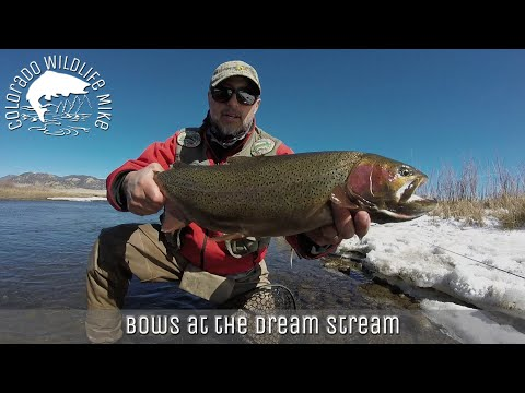 Episode 18: Big Bows At The Dream Stream