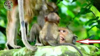 Oh no doesn't disturb baby Lori | Amari angry Maria because do not good on her baby Lori |