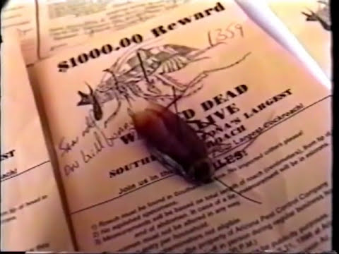 Arizona Pest Control- The Biggest Cockroach Contest!