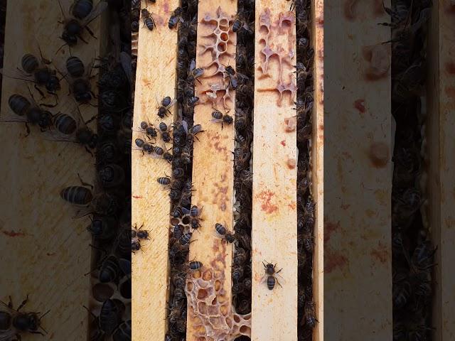 Première ouverture de ruche  saison 2020