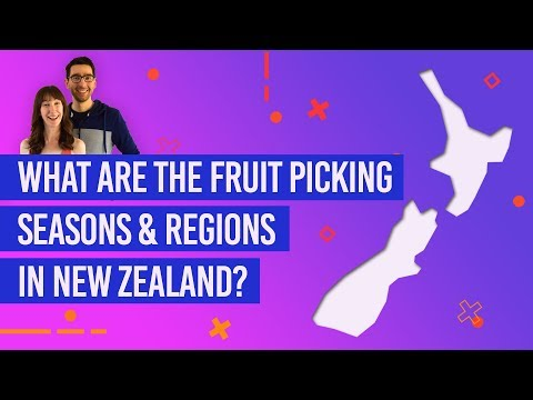 What Are The Picking Seasons & Regions In New Zealand?