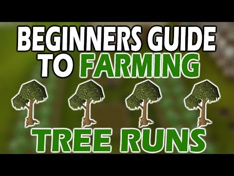 [OSRS] ULTIMATE Beginners TREE RUN GUIDE | Farming For Noobs