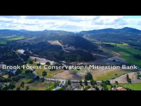 Wetlands 3 - Brook Forest Conservation/Mitigation Bank