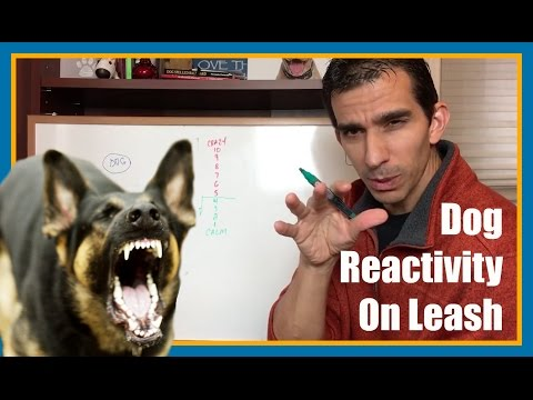 How To Work On Dog Reactivity On Leash