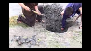Cứ phải đào hố sâu khi thuỷ triều xuống để bắt được nó là biết hiếm cỡ nào rồi đấy