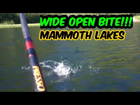 Mammoth Upper Twin Lake Hot Trout Fishing Action!!!