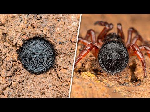 10 giftigsten Spinnen der Welt