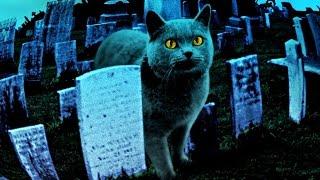Кладбище домашних животных Трейлер