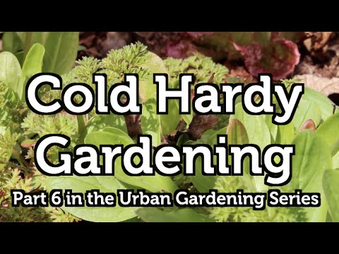 Start a Spring Cold Hardy Garden in Zone 3
