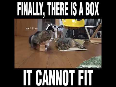 WATCH THIS CAT TRYING TO FIT IN THIS TINY BOX
