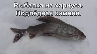 Рыбалка на хариуса Подлёдная зимняя