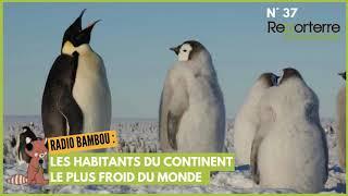 Radio Bambou 37 - Les habitants du continent le plus froid du …