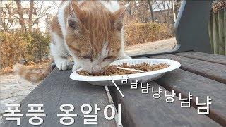 아기 길고양이에게 밥을 줬는데 냠냠냠 소리를 내며 허겁지겁 먹어요 feat 골골송