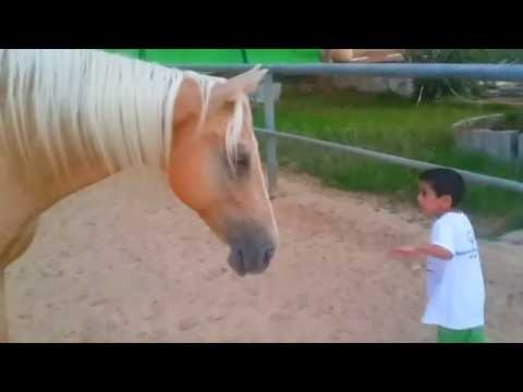 A young horse creates a sensitive and soft connection with a 4-year-old boy with Williams syndrome.