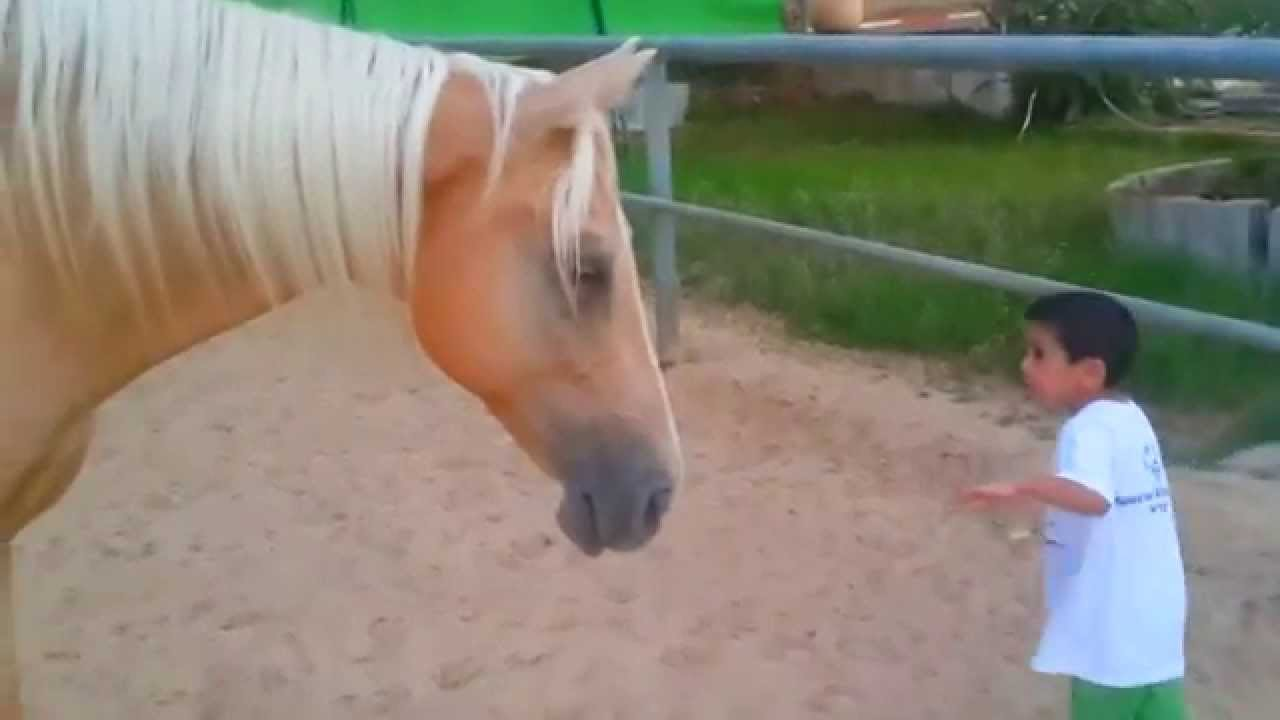 A young horse creates a gentle and soft connection with a 4-year-old child with Williams syndrome.