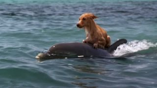 DOLPHIN & DOG SPECIAL FRIENDSHIP - Vangelis: Song Of The Seas