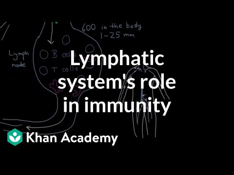 The lymphatic system's role in immunity | Lymphatic system physiology | NCLEX-RN | Khan Academy