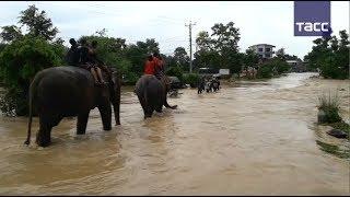 Слоны помогли спасти туристов от наводнения в Непале