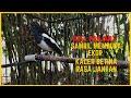 Kacer Betina Buka Ekor Gacor Birahi Ngeplong Memancing Kacer Jantan Agar Gacor  Mp3 - Mp4 Download
