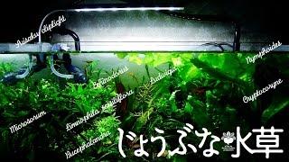 CO2や光量のいらない水草水槽(アクアリウム) thumbnail
