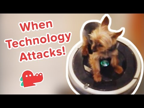 Dogs Vs. Appliances: Funniest Animal Videos, Clips & Compilation