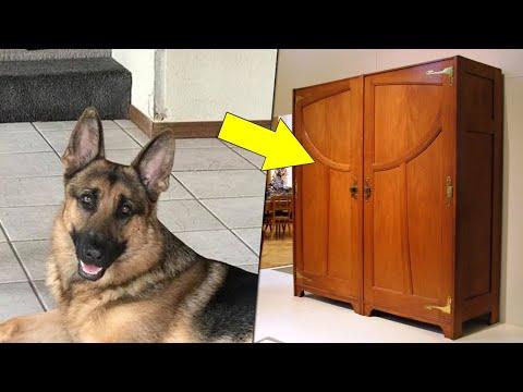 اختبأ في الخزانة عندما دخل اللصوص الى منزله ، ولكن كلبه فعل شيئا لا يصدق  - نشر قبل 13 ساعة