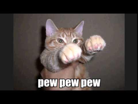 Funny Cat Videos No Sound
