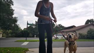 How To: E-collar Training Video Series #5 Phase 1 Heel - Take The Lead K9 Training