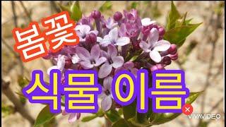 식물이름, Name of a plant, 식물 이름 찾…