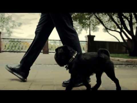 Умная собака. Бельгийский (брюссельский) гриффон. Гарри. Smart dog. Brussels (belgian) griffon.