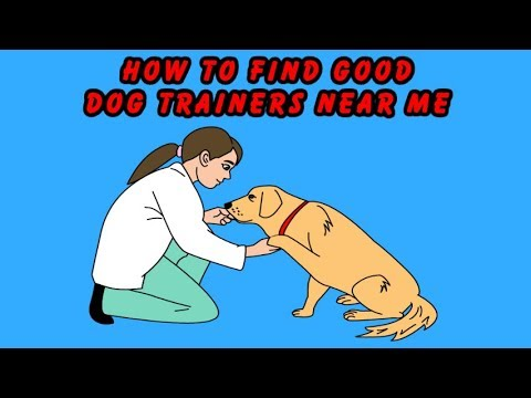 🐶 How To Find Good Dog Trainers Near Me 🐶