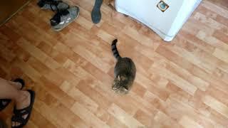 Кормление соседского кота(часть 3)