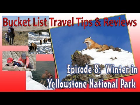Winter in Yellowstone National Park - Amazing Bucket List Adventure