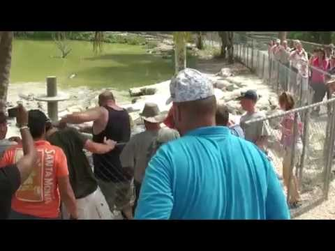 Construction worker on vacation jumps in to help when handler is bit at Everglades alligator farm.