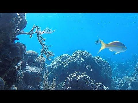 Plongée à CUBA