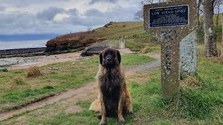 LEONBERGER DOG LOVING LIFE BY THE RIVER