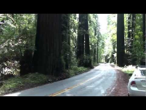 Avenue of the Giants - Humboldt Redwoods State Par