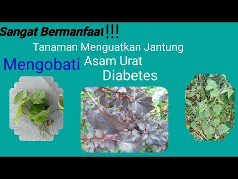 obat-herbal-jantung-|-obat-asam-urat-|-obat-diabetes-|-herbal-untuk-membakar-lemak-|-melangsingkan