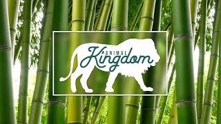 Царство животных | Дмитрий Немченко | Слон