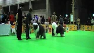 2009年1月18日千葉インターナショナルドックショー 幕張メッセ OES♂ BES...