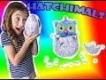 Hatchimals Review