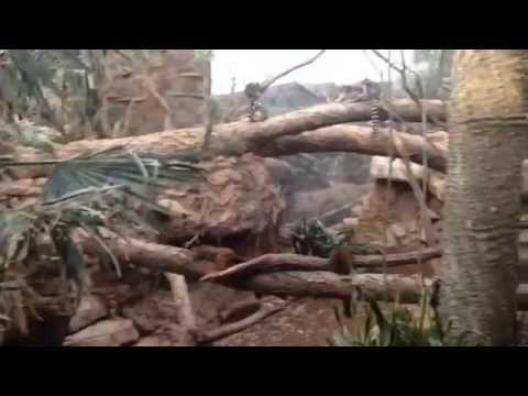 Vlog: Day at the Zoo