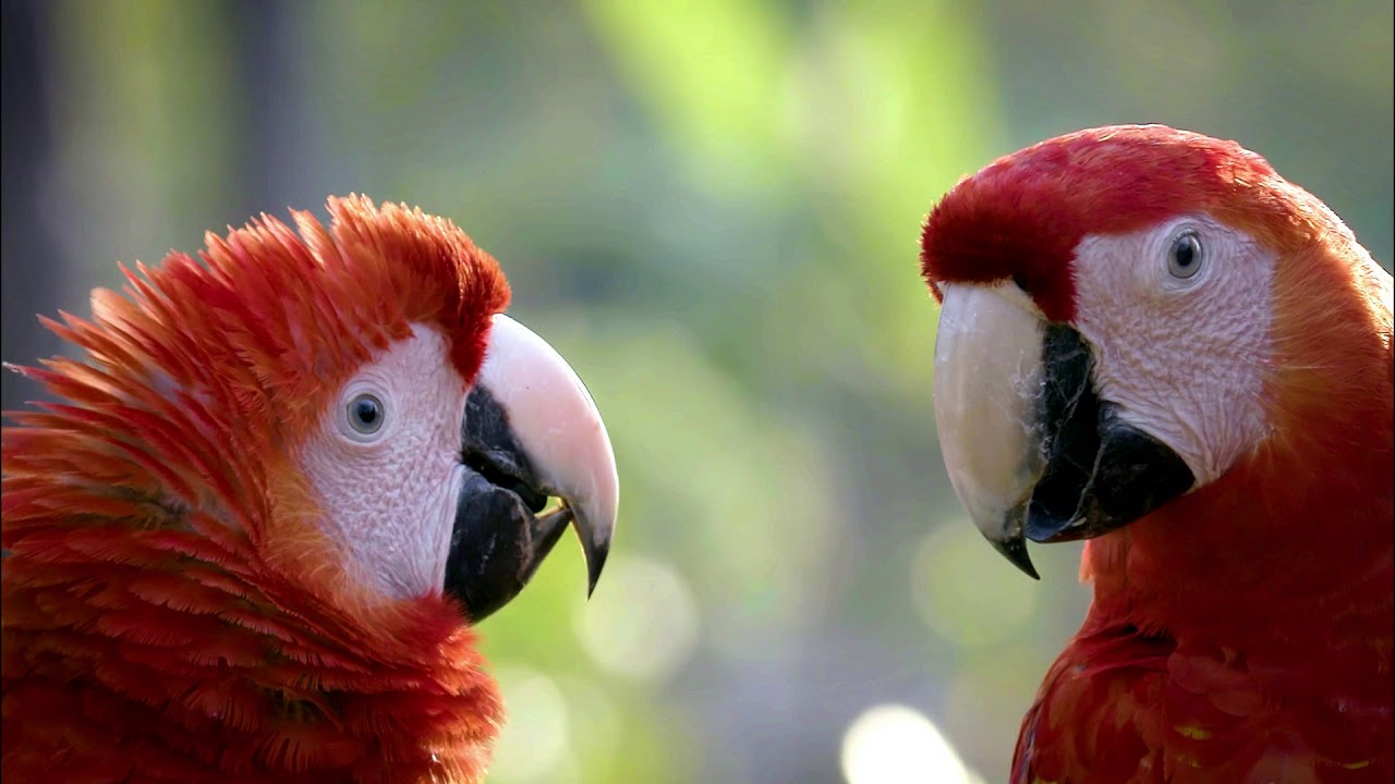 A Macaw Meditation - What Does the Macaw Say?
