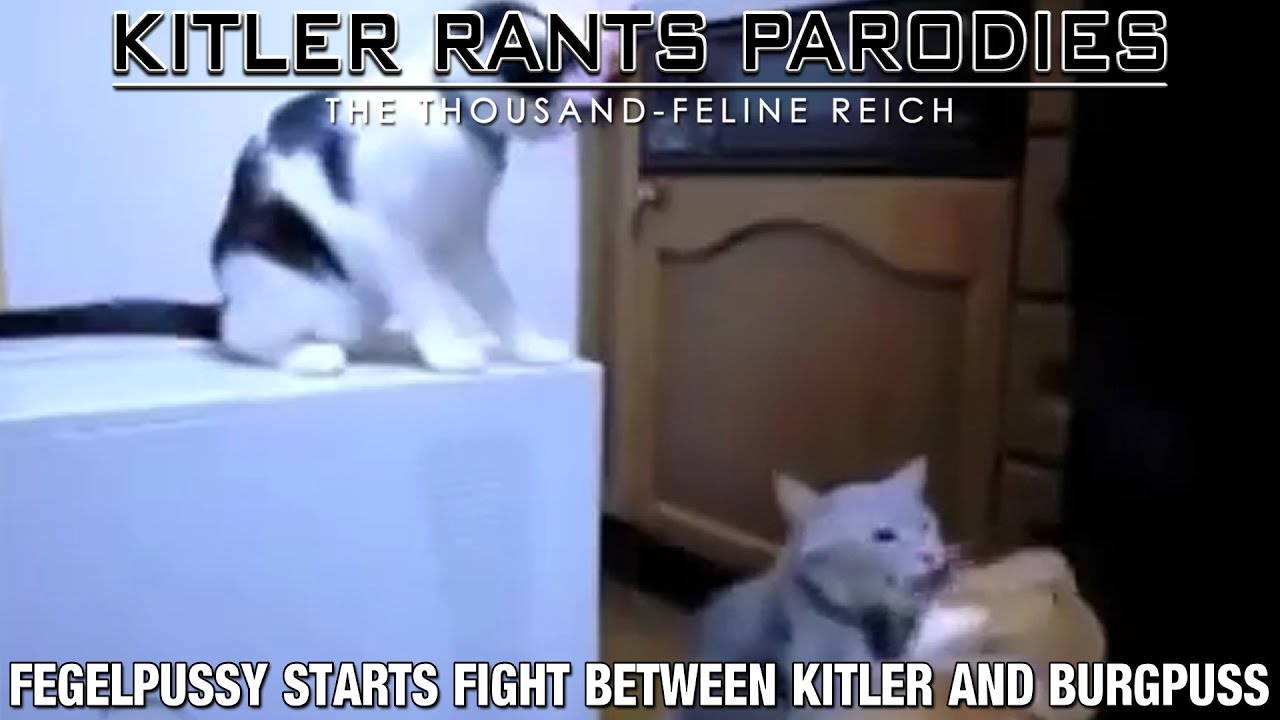 Fegelpussy starts fight between Kitler and Burgpuss
