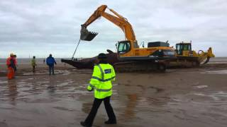 Viral Video UK: Sperm whale removal from Skegness beach