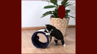 игрушка кошка на поводке