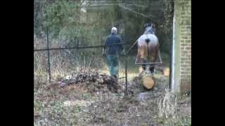 Débardage dans un jardin