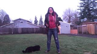 Puppy Potty Training 1: Let's discuss potty training your puppy! Ideas to on potty training early.