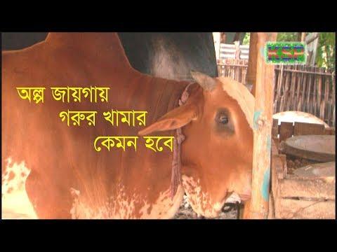 অল্প জায়গায় গরুর খামার | Cattle Farm in a small place